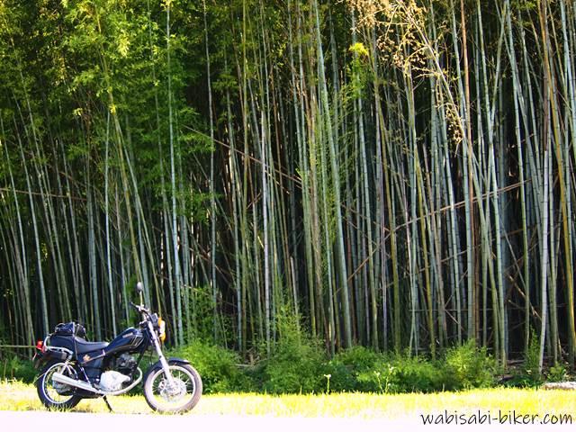 オートバイと竹