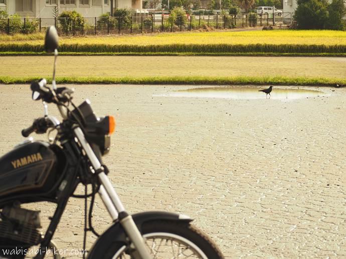 バイクとカラスと干上がった池