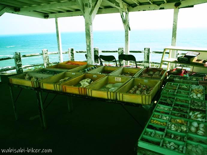 御前崎灯台の貝殻屋さん