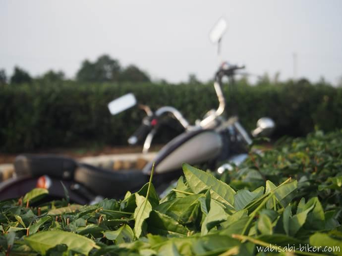 刈られたお茶っ葉とオートバイ