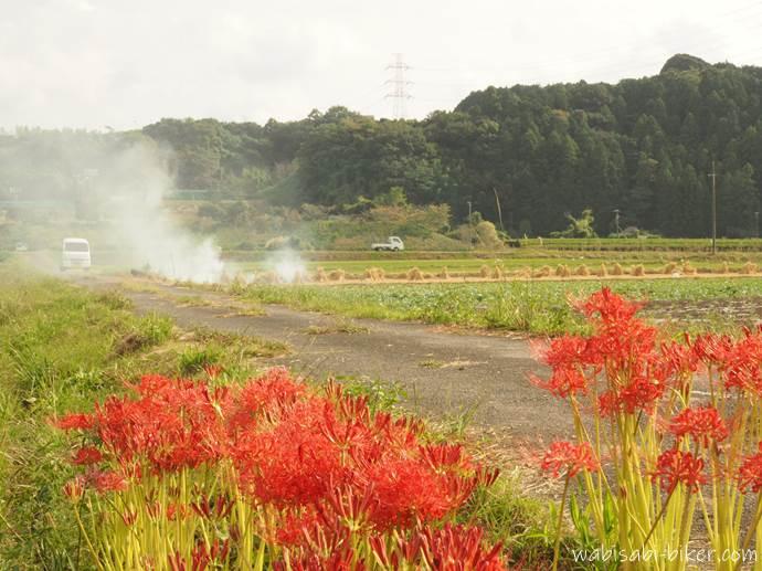彼岸花と稲わら焼き