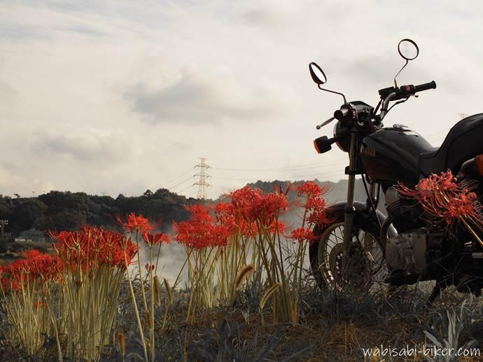 バイクと彼岸花のある風景