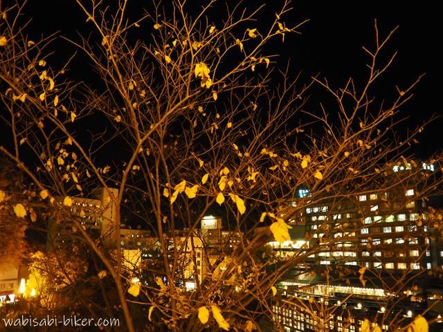 定山渓温泉 見返り坂からの黄葉夜景
