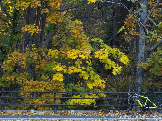 定山渓の黄葉と自転車