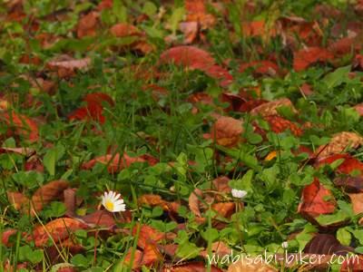 小金湯温泉の落ち葉と小花