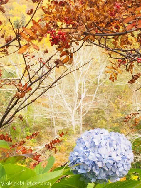 定山渓 紅葉と紫陽花