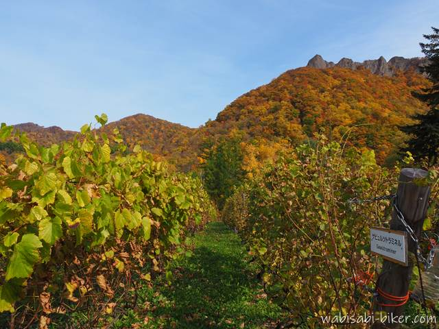 八剣山ワイナリー 紅葉