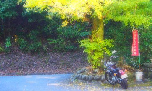 イチョウの黄葉とオートバイ
