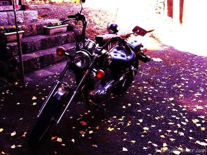 バイクとイチョウの落ち葉