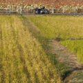 秋の蓮池で、バイク写真☆YAMAHA SR125