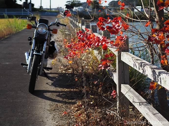 蓮池の紅葉とバイク