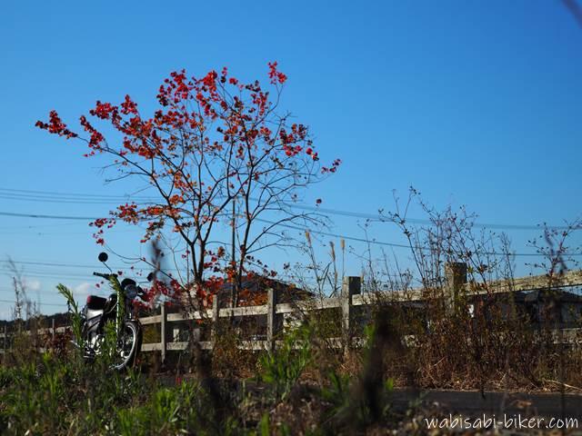 紅葉と雑草とバイク