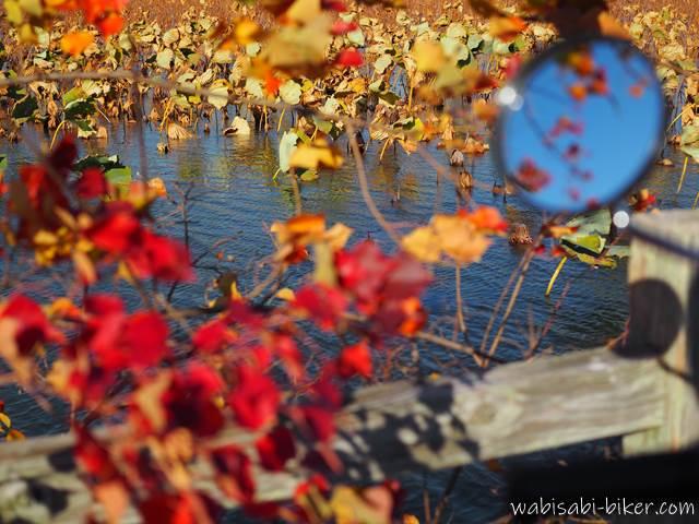 蓮池と紅葉とバイクのミラー