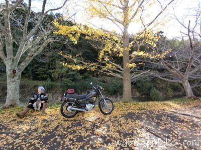 バイクとイチョウと自撮り