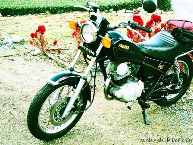 オートバイとケイトウ