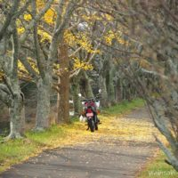 バイクで紅葉狩り