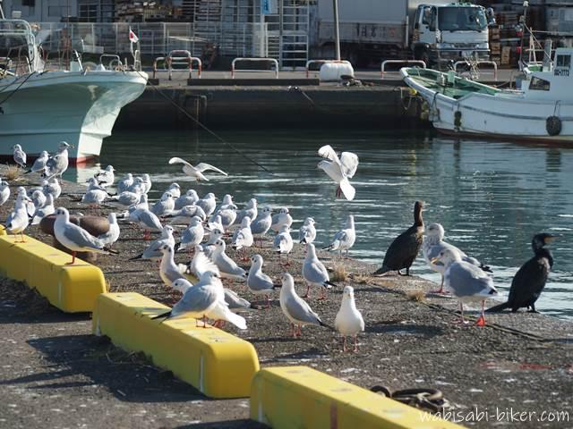 焼津小川港の海鳥