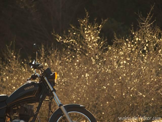 バイク写真 梅の花とオートバイ
