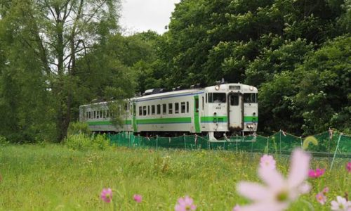 新十津川駅へ向かう列車と秋桜