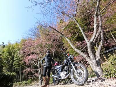 桜とバイクと自撮り