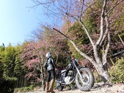 バイクと早咲き桜と自撮り