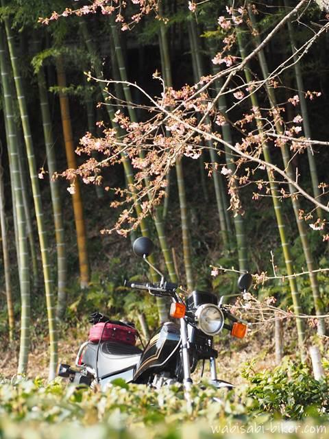 バイクと桜と竹
