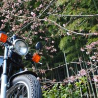 オートバイと早咲き桜と竹