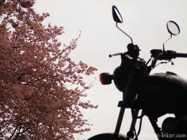 早咲き桜とオートバイ