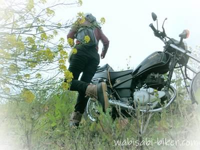 女性バイク乗りと菜の花