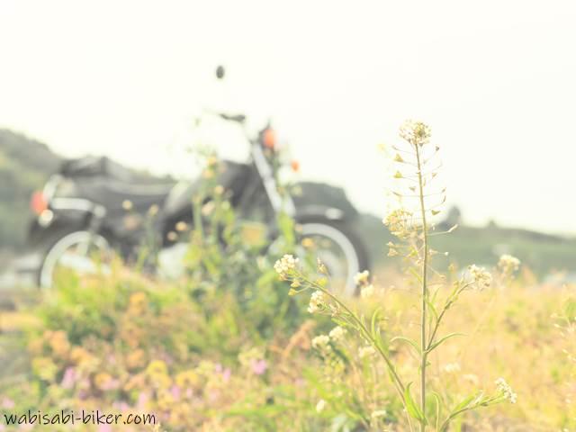 畑のナズナとオートバイ