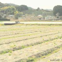 レタス畑の跡とオートバイ