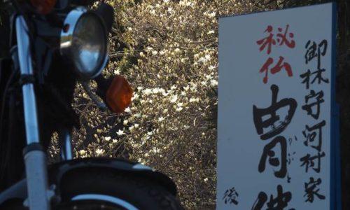 ハクモクレンとオートバイと秘仏の看板