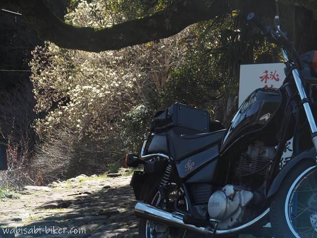 秘とオートバイと旧家のモクレン