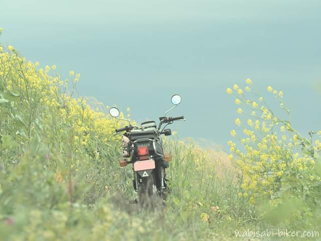 曇り空の菜の花とオートバイ