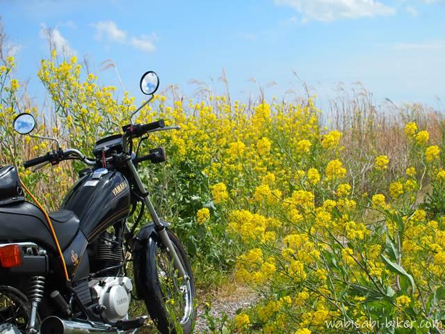 土手沿いの菜の花とオートバイ