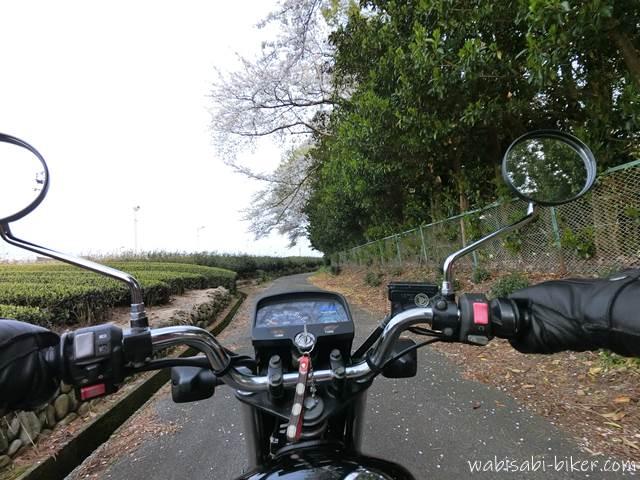 桜と茶畑の小道を走るバイク