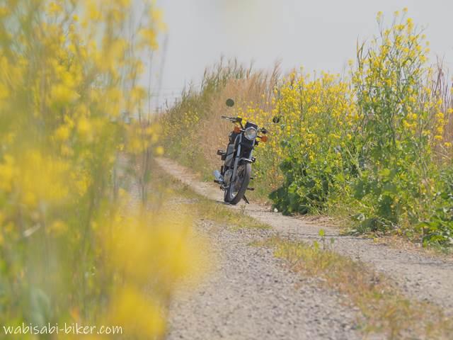 菜の花とバイク ライトトーン