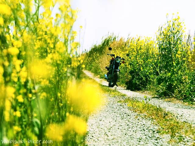 菜の花とバイク クロスプロセス