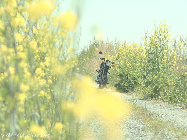 菜の花とバイク デイドリーム