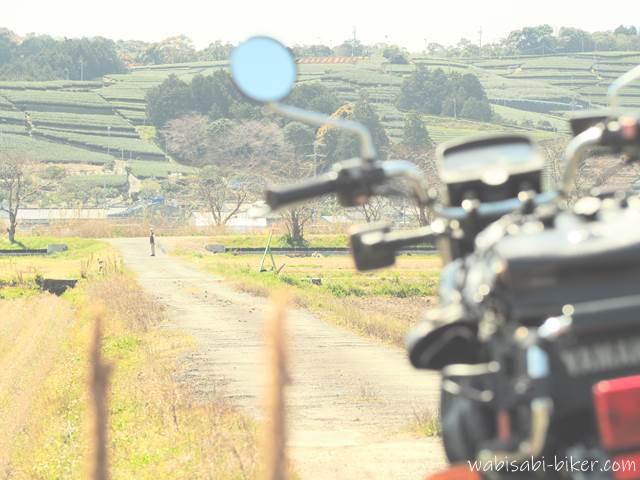 茶畑の見える小道を散歩する人とバイク