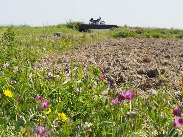 畑沿いに咲く春の野花とバイク