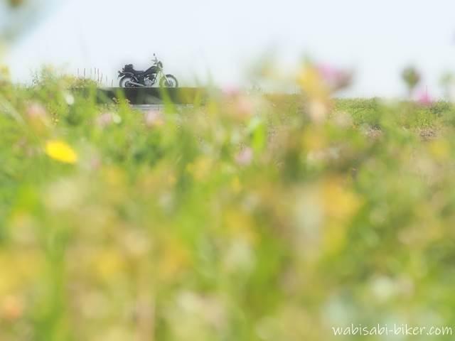 メルヘンな春の野花とバイク