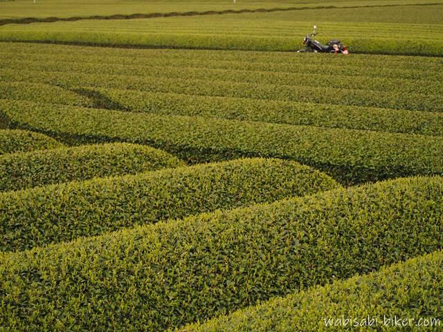 茶畑美とバイク