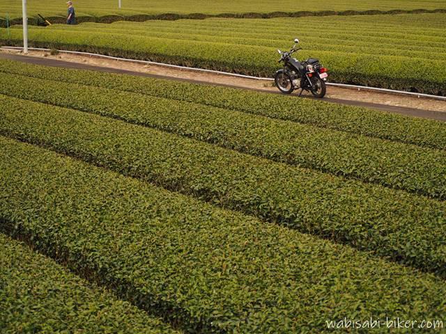 茶畑とバイクと散歩する人