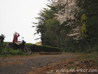 桜を見上げる女性ライダー