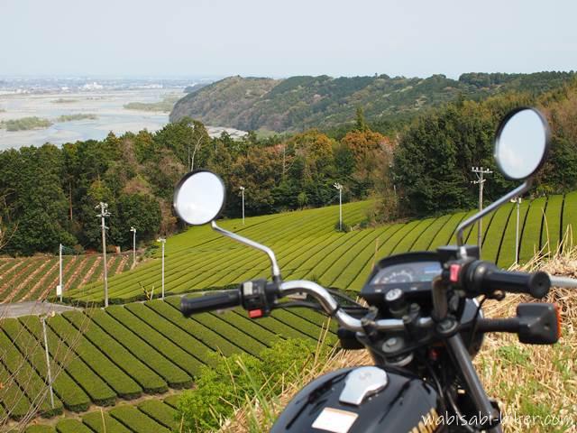 萌える茶畑とバイク