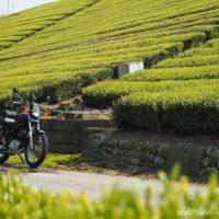 新緑の茶畑とバイク