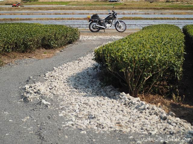 茶畑の道とバイクと水を張った田んぼ