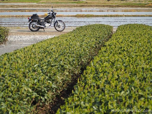 茶畑とバイクと水を張った田んぼ