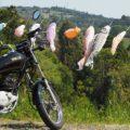 里山でバイク写真撮影☆鯉のぼり&タケノコ編